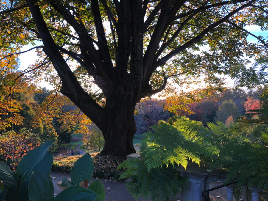 Radnor Spaces: A Stroll Through Chanticleer Gardens