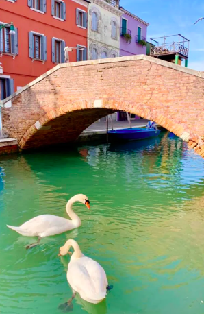 The canals in Venice are running clear
