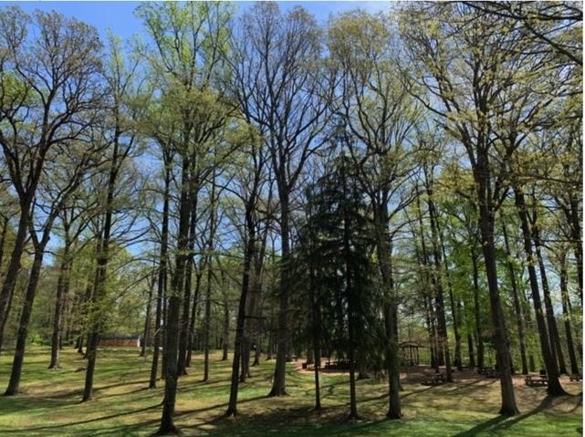 Fenimore Woods Park Renovation